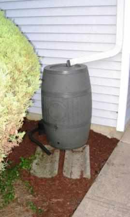 a photograph of a rain barrel with the overflow hose directing the overflow water to a nearby garden
